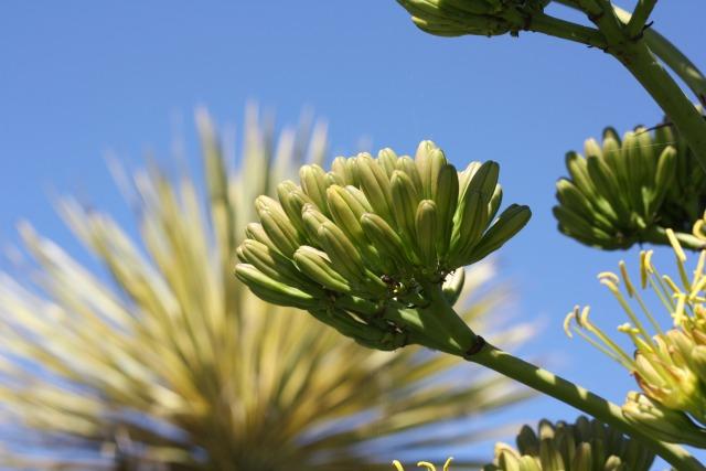 Tropical San Francisco plants