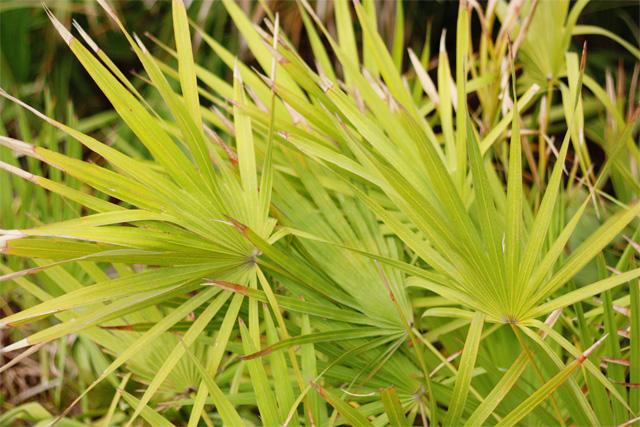 Tropical ferns in South Beach park