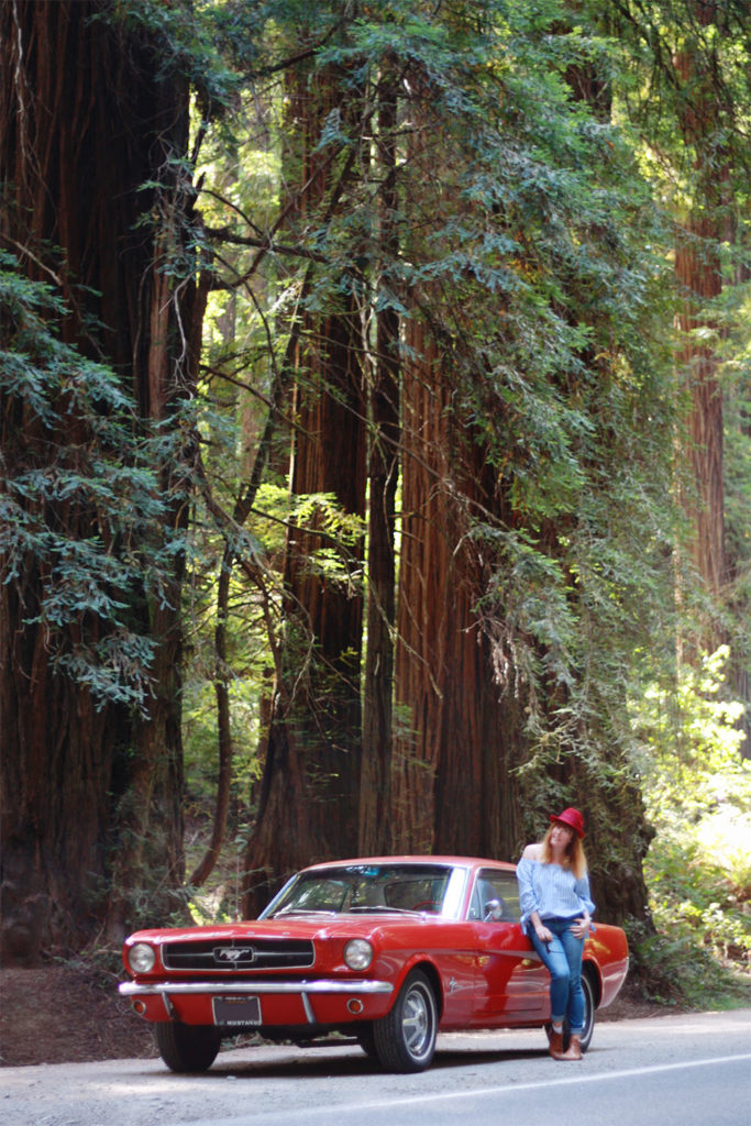 Old Redwood Highway