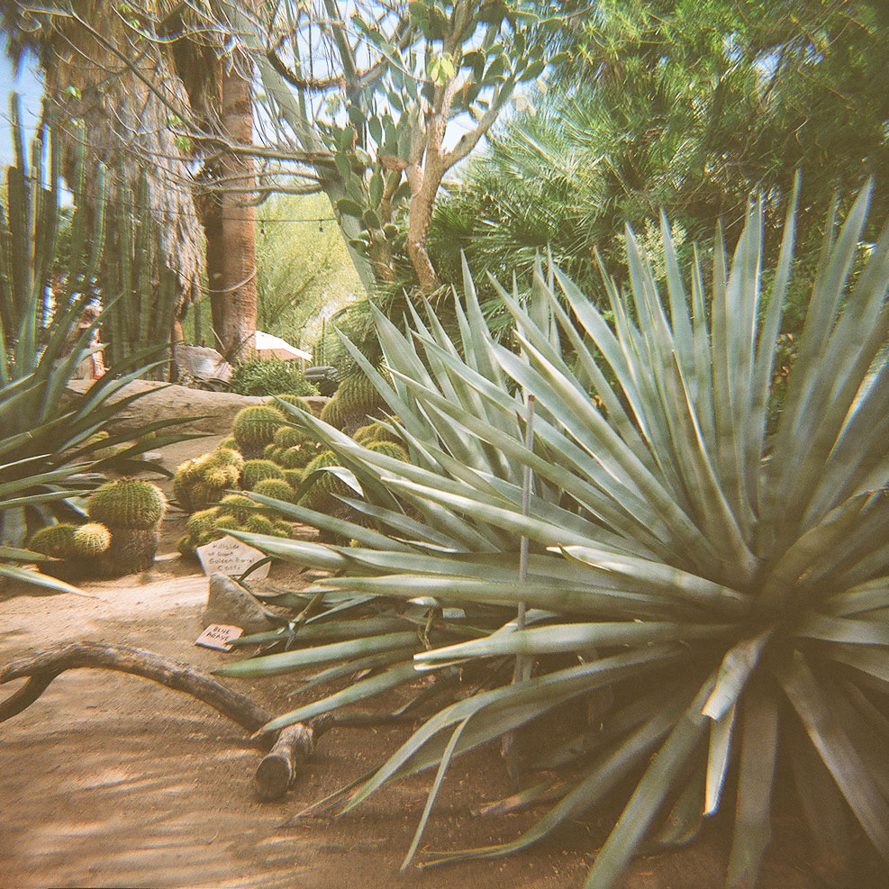 Moorton Garden Palm Springs lomography